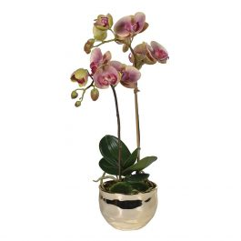 Dusty Pink and Green Orchid Phalaenopsis Plant in Gold Pot