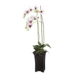 DECO ORCHID PHALENO POTTED