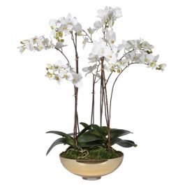 White Orchid Pretty Phalaenopsis Plants in Shallow Gold Glass Bowl