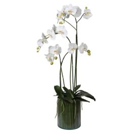 White Orchid Phalaenopsis Plants in Glass Cylinder Vase